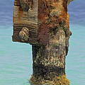 Rusted Dock Pier Of The Caribbean Iv by David Letts