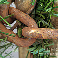 Rusted Links by Anne Ferguson