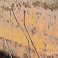 Rustic Landscape by Luke Moore