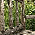 Rustic Seating by Susan Herber