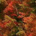 Rustling Autumn Leaves by Barbara S Nickerson