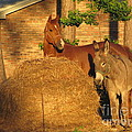 Rusty And Brown Sugar by Michelle Powell