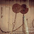 Rusty Saw Blades by Christy Beal