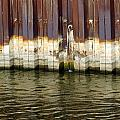 Rusty Wall By The River by Anita Burgermeister