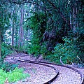 S Curve In The Forest by Eric Tressler