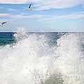 S P L A S H by Kaye Menner