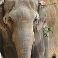 Sad Elephant by Kym Backland