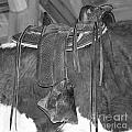 Saddle Over Cowhide in black and white