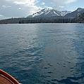 Safari Rose.on Lake Tahoe by LeeAnn McLaneGoetz McLaneGoetzStudioLLCcom