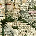 Safed Galilee Israel by Daniel Blatt