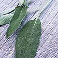 Sage Leaves by Maxine Adcock
