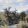 Sagebrush And Snow by Wes and Dotty Weber