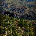 Saguaro Views To Rincon Peaks by Aaron Burrows