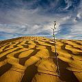 Sahara Desert, Tunisia, Africa by David DuChemin