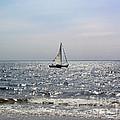 Sail Alone by Anne Ferguson