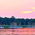 Sail Boats Pretty In Pink  by Randall Branham