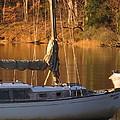 Sailboat At Sunset by Valia Bradshaw