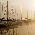 Sailboats In Golden Fog by Randall Branham
