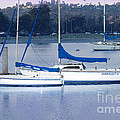 Sailboats San Diego by Betty LaRue