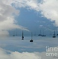 Sailboats by Stephanie Laird