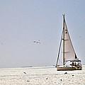 Sailing by Anusha Hewage
