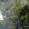 Sailing Boat And Trees by Mats Silvan