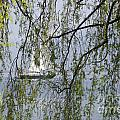 Sailing Boat Behind Tree Branches by Mats Silvan