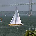 Sailing Newport by Tim Mulina