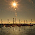 Sailing Under The Sun White Rock Bc by Diane Dugas