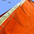 Sails Five by Kathleen Horner