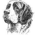 Saint-bernard-drawing by Gordon Punt