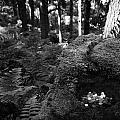 Saint Patricks Well Altadaven Favor Royal Forest Bullaun Stone County Tyrone Ireland by Joe Fox
