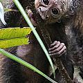 Sak-monkey by Elizabeth Hart