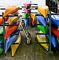 Salma Kayaks by Debbi Granruth