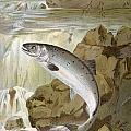Salmon, C1900 by Granger