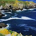 Saltee Islands, Co Wexford, Ireland by The Irish Image Collection
