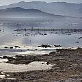 Salton Sea Birds by Linda Dunn