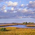 Saltwater Marshes At Cedar Key Florida by Tim Fitzharris
