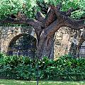 San Antonio Shade by Judy Hall-Folde
