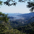 San Francisco As Seen Through The Redwoods On Mt Tamalpais by Ben Upham III
