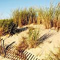 Sand Dune IIi - Jersey Shore by Angie Tirado