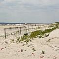 Sand Dunes by Ann Murphy