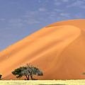 Sand Dunes, Sossusvlei by Marco Brivio