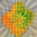 Sand Flower by Mitch Shindelbower