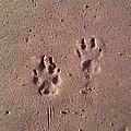 Sand Paws by Jenna Mackay