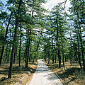Sand Road Through The Pine Barrens, New by Skip Brown
