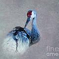 Sandhill Crane 2 by Betty LaRue