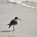 Sandpiper by Christine Stonebridge