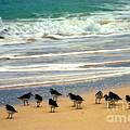Sandpipers by Karen Wiles