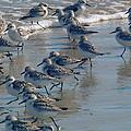 Sanderlings by Nancy Griswold